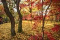 Fall Foliage in Kyoto Royalty Free Stock Photo