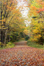 Fall foliage leaves on dirt road Stock Image