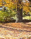 Fall foliage in a park Royalty Free Stock Photos