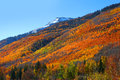 Fall foliage in San Juan mountains Royalty Free Stock Photo