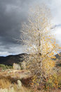 Fall foliage sangre de cristo mountains tree with against cloudy sky in the northern new mexico Stock Images