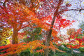 Fall foliage in texas a burst of color with japanese maple trees on display Stock Photos