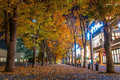 Fall foliage in yokohama japan Royalty Free Stock Photo