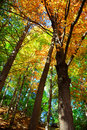Fall forest Stock Photos