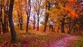 Fall forest ant tiny road, Buivydu piliakalnis mound Royalty Free Stock Photo