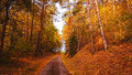 Fall forest ant tiny road Royalty Free Stock Photo