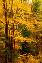 Fall forest background Stock Images