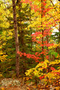 Fall forest background Stock Photo