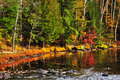 Fall forest and lake shore Royalty Free Stock Image