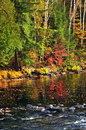 Fall forest and lake shore Royalty Free Stock Photo