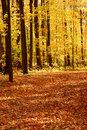 Fall forest landscape Royalty Free Stock Images
