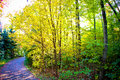 Fall forest path Royalty Free Stock Photography