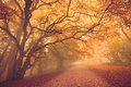 Fall forest path Royalty Free Stock Photo