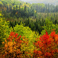 Fall forest rain storm Royalty Free Stock Photos