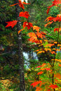 Fall forest and river Stock Image