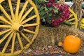 Fall Harvest Royalty Free Stock Photo