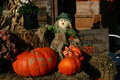 Fall harvest pumpkins Royalty Free Stock Images
