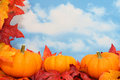 Fall Harvest Scene Royalty Free Stock Photos