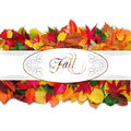 Fall image colorful autumn leaves on white background with copy space for your text Royalty Free Stock Images