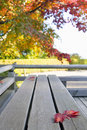 Fall Japanese Maple Leaves on Wood Bench Stock Photos