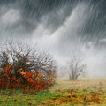 Fall landscape in rain and fog Royalty Free Stock Photo