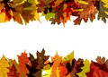 Fall leaf border Royalty Free Stock Image