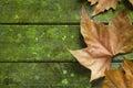 Jeseň pokles list zelený