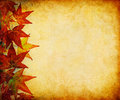 Fall Leaf Margin Stock Images