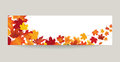 Fall leaf nature banner. Autumn leaves background. Season floral