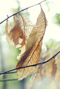 Fall leaf this is photo of dry leaves Royalty Free Stock Photo