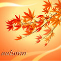 Fall leave Stock Photography