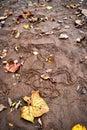 Fall Leaves Along River Bank Royalty Free Stock Photo