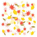 Fall leaves background Stock Images