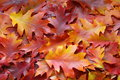Fall leaves background stock photos yellow autumn oak leaf on orange backdrop Royalty Free Stock Photo