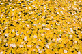 Fall leaves bed Stock Images