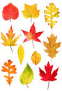 Fall leaves collection Stock Photo