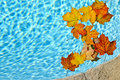 Fall leaves floating in pool Royalty Free Stock Photos