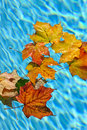Fall leaves floating in pool Royalty Free Stock Photo
