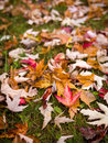 Fall leaves on ground Royalty Free Stock Image