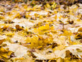 Fall leaves on ground in nature Stock Photos