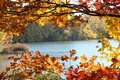 Fall leaves in Minnesota Royalty Free Stock Photo