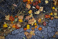 Fall leaves on pavement Royalty Free Stock Photo