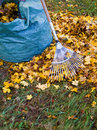 Fall leaves pile of with rake on lawn Stock Images