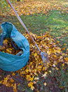 Fall leaves pile of with rake on lawn Stock Image
