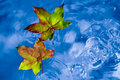 Fall leaves on the rain in a puddle Royalty Free Stock Photo