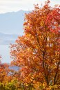 Fall Leaves in the Rocky Mountains above Provo, Utah Royalty Free Stock Photo