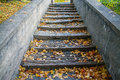 Fall leaves on the steps Royalty Free Stock Photo