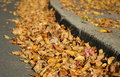 Fall leaves in street gutter Royalty Free Stock Images
