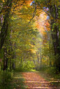Fall Leaves Trail Royalty Free Stock Photo