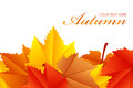 Fall leaves vector illustration of Royalty Free Stock Image